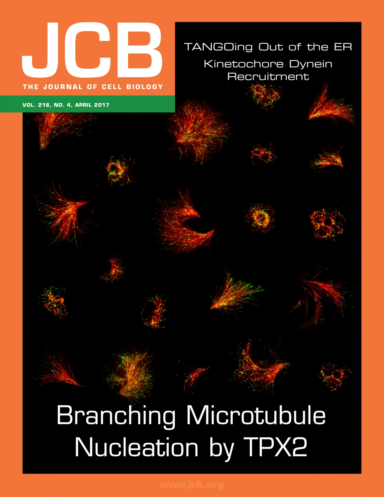 Cover of Journal of Cell Biology