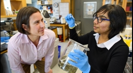 Petry lab reverse engineers the 'fireworks of life'