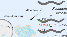 C. Elegans research published in Cell