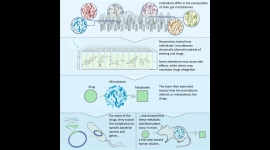 Donia publishes study on gut microbiome and efficacy of medications