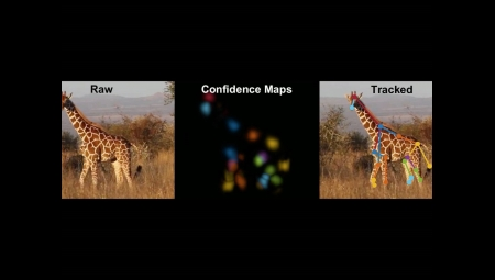 Translating the 'language of behavior' with artificially intelligent motion capture
